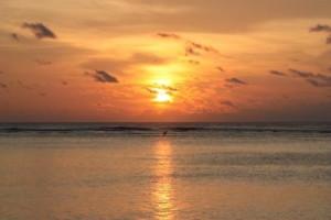 voyage-seychelles-bird