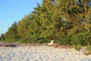 voyage-seychelles-bird-island