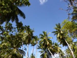 iles-seychelles9