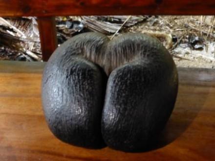 voyage-sejour-seychelles-coco fesse-cocotier-flore