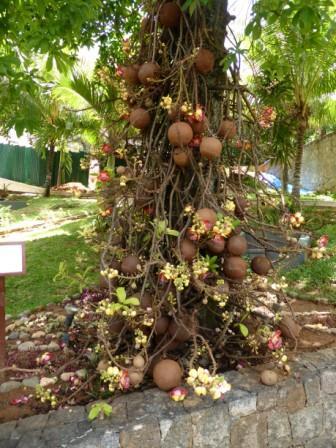 iles-seychelles-voyage-circuit-routedesseychelles-arbre
