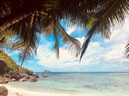 palmier-sable-blanc-seychelles-plage-mer-bleu-vacances-voyage-circuit-sejour